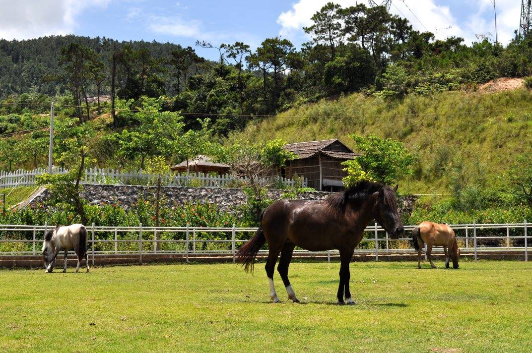 volunteer project: Sustainable Farming and Animal Sanctuary photo 15