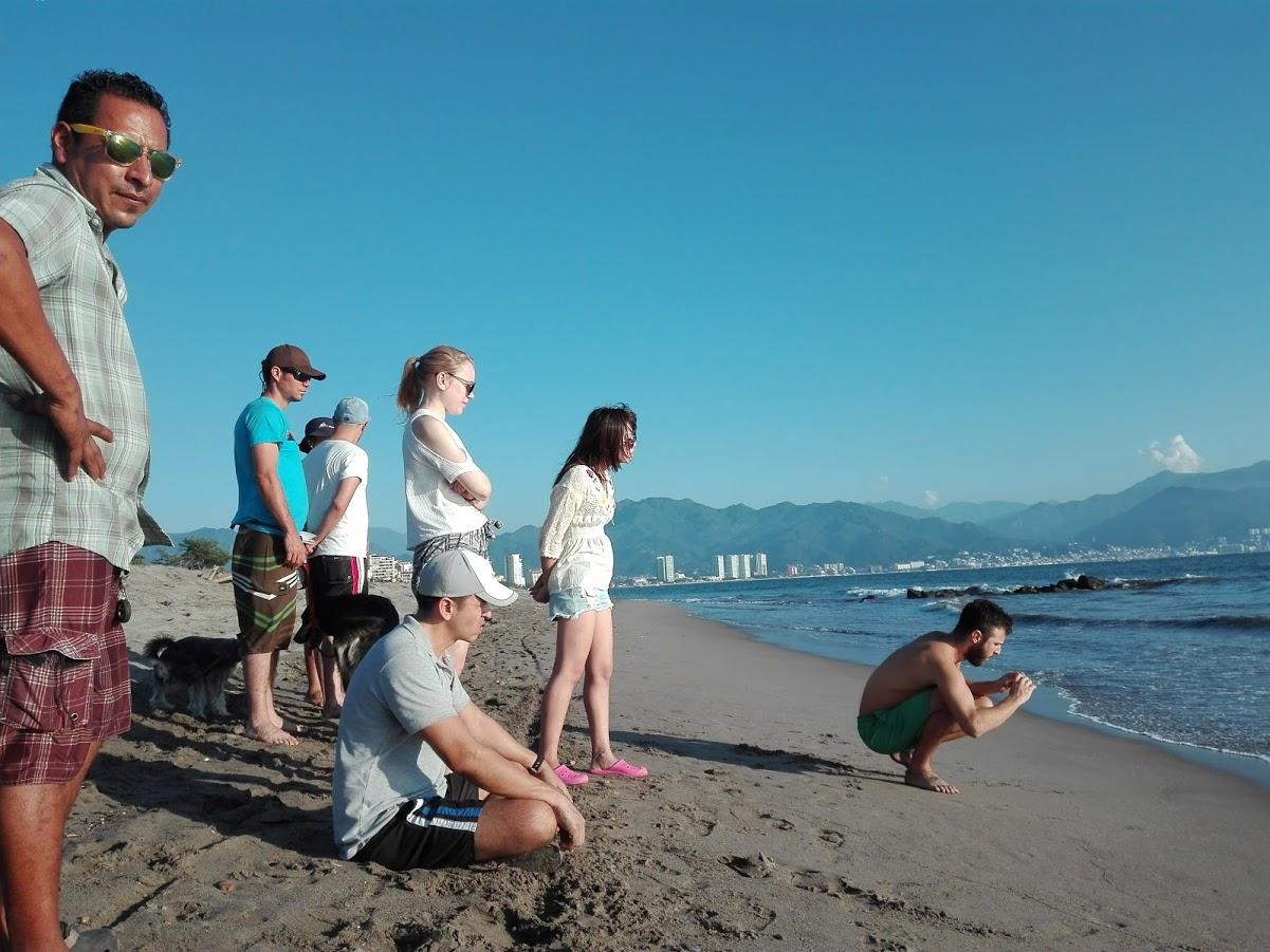 volunteer project: SEA TURTLES Conservation photo 8