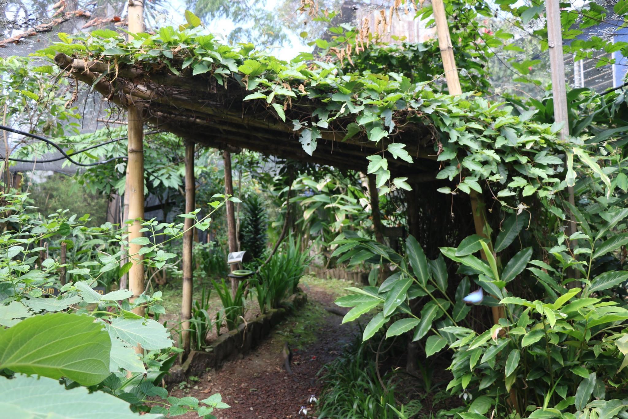 Image result for Spirogyra Jardín de Mariposas