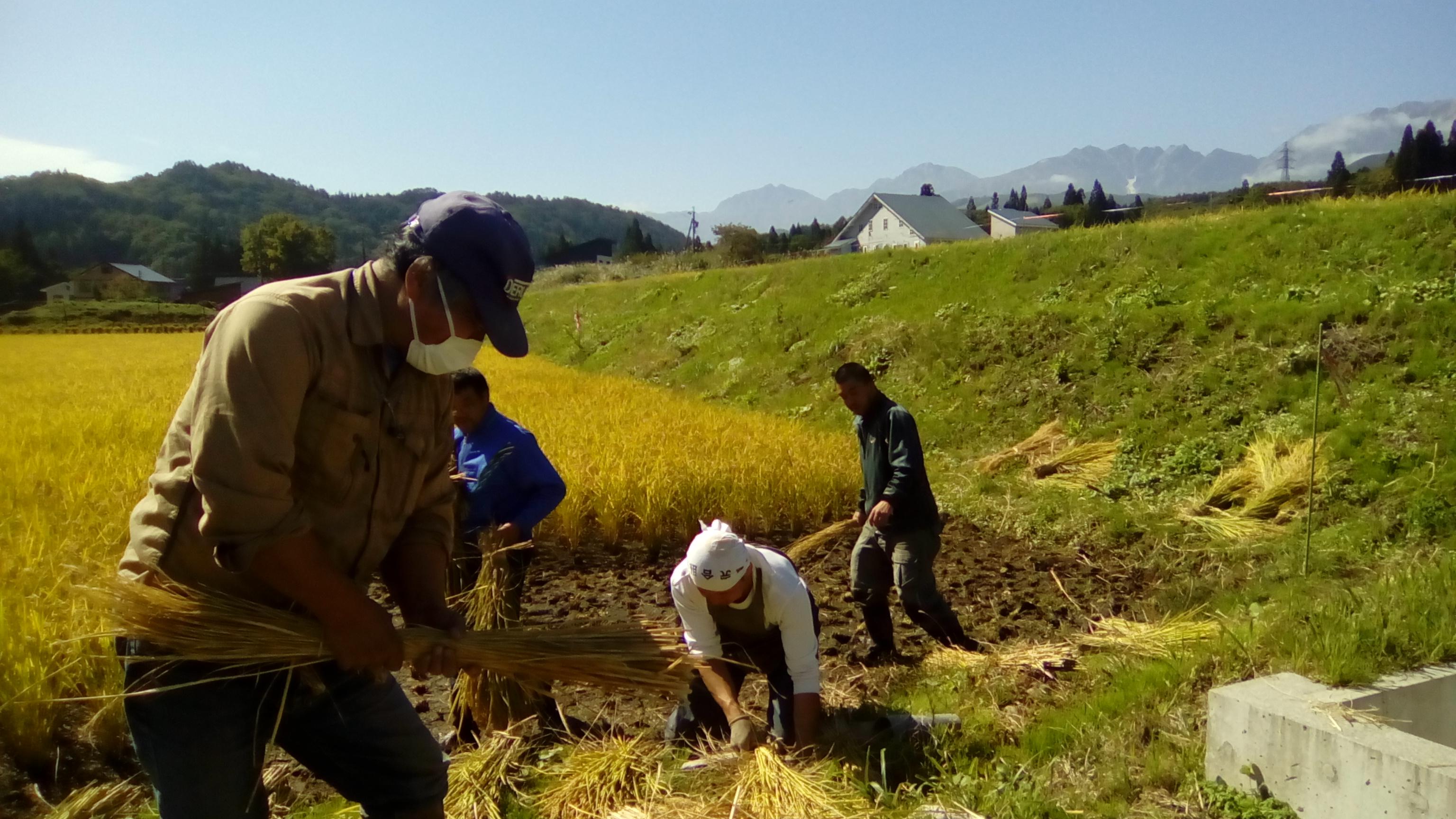 volunteer project: Tateya 18-1 (Nagano) photo 1