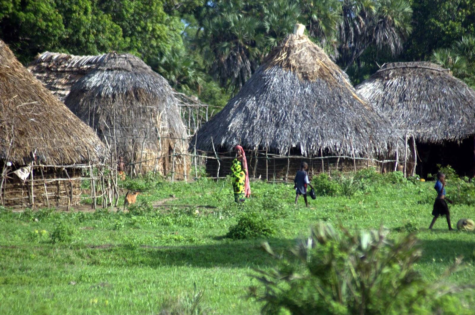 volunteer project: Kaya Kinondo Ecotourism Project photo 2