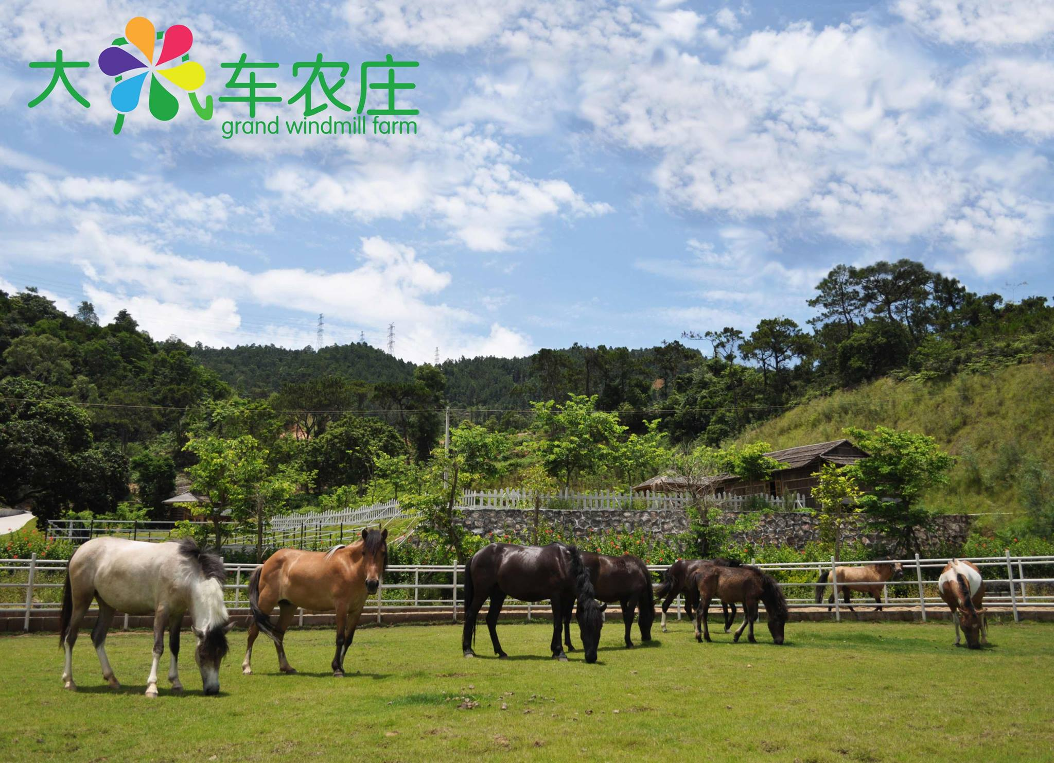 volunteer project: Sustainable Farming and Animal Sanctuary photo 3