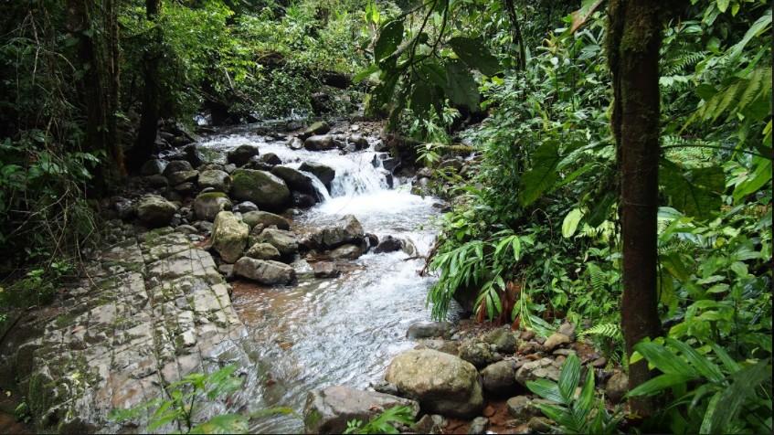 volunteer project: Biological Reserve of Fudebiol photo 2