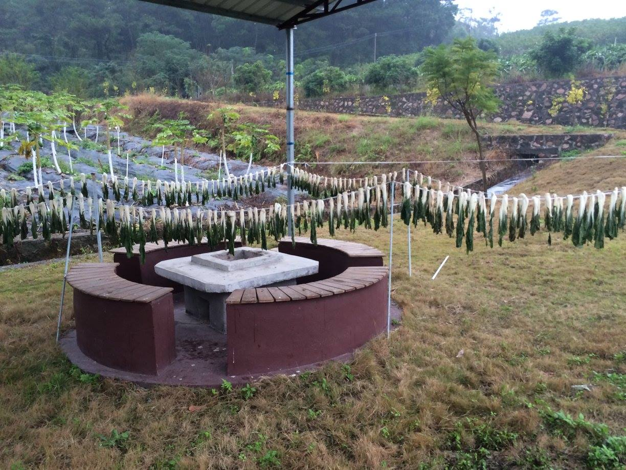 volunteer project: Sustainable Farming and Animal Sanctuary photo 8