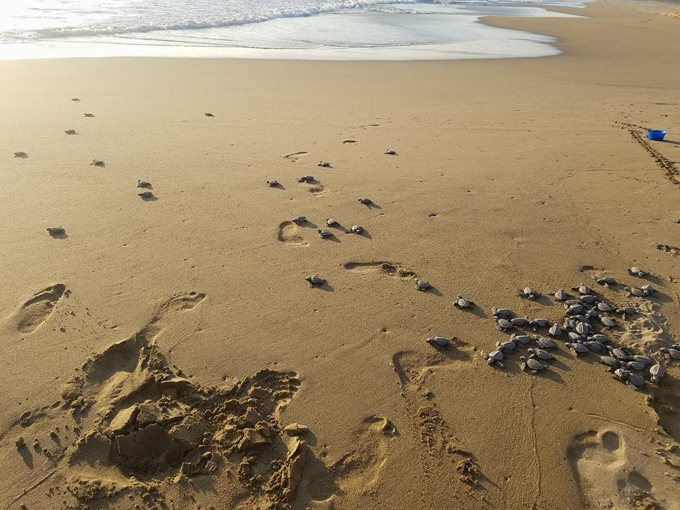 volunteer project: TURTLES CAMP photo 6
