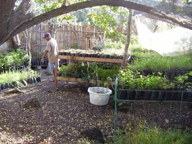 volunteer project: VOLUNTEERING IN GALAPAGOS photo 4