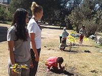 volunteer project: Make Cochabamba Green Again photo 1