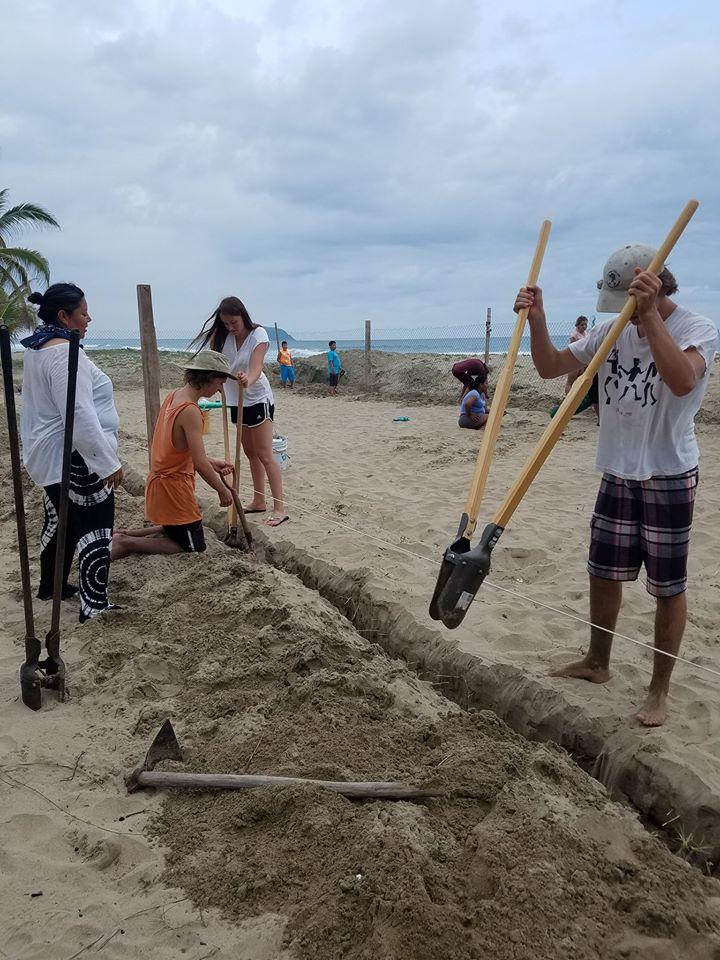 volunteer project: TURTLES CAMP photo 1