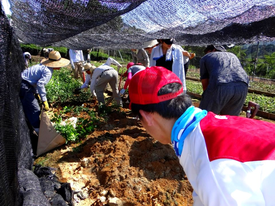 volunteer project: Wazuka (Kyoto) photo 2
