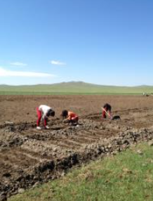 volunteer project: GREENING MONGOLIA photo 4