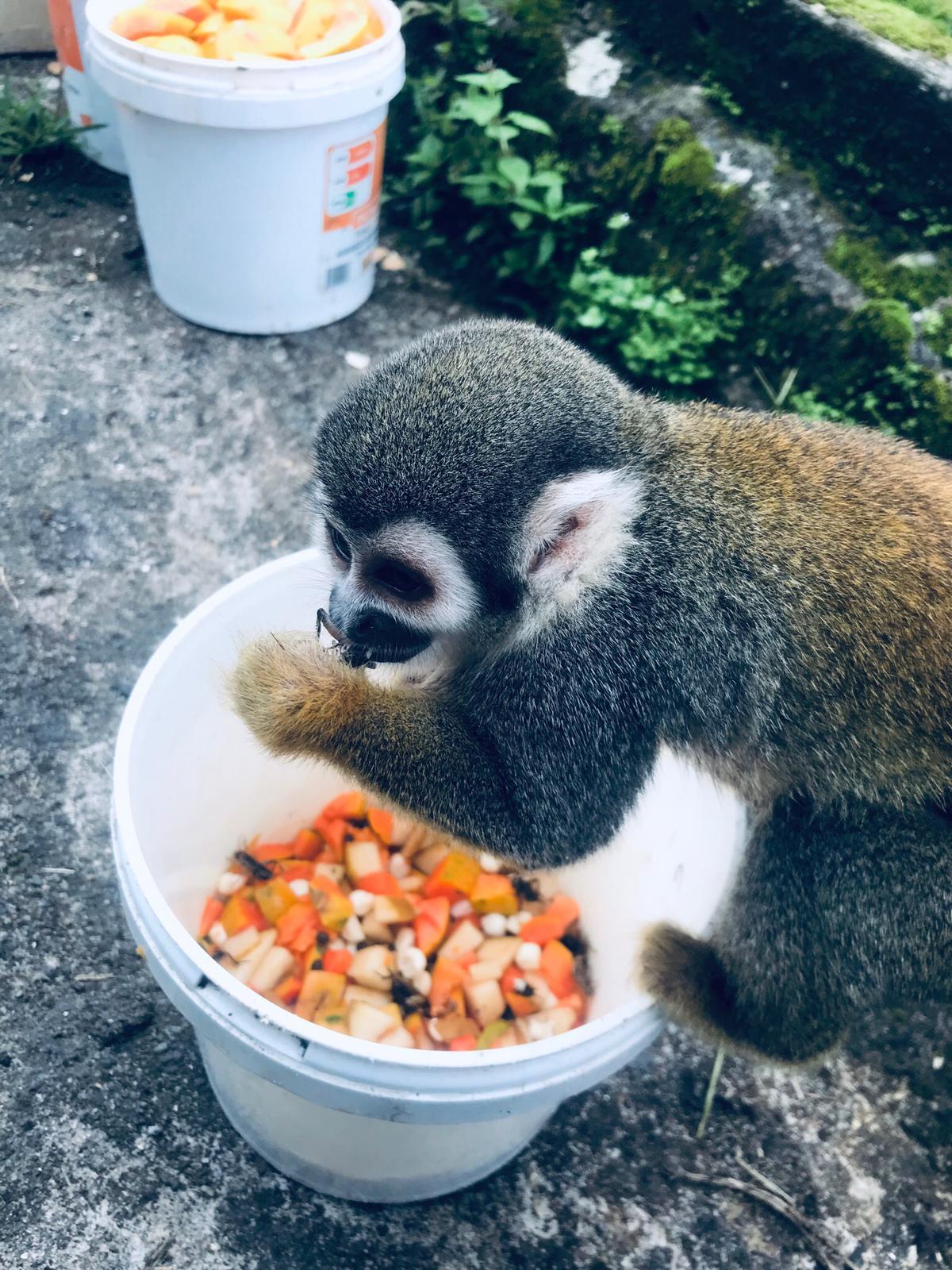 volunteer project: Zoorefugio Tarqui photo 1