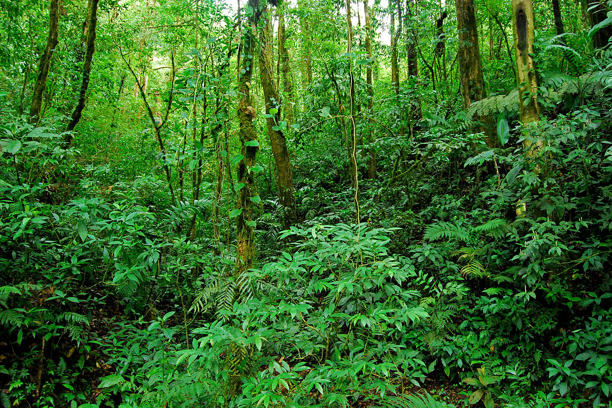 volunteer project: SANTA ELENA CLOUD FOREST photo 2