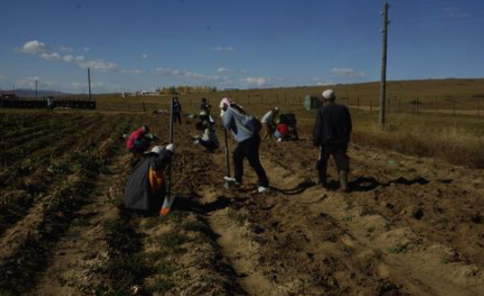 volunteer project: Eco farm planting photo 2