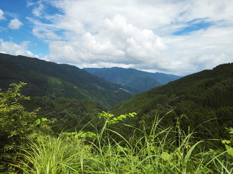 volunteer project: Shiba (Miyazaki) photo 2