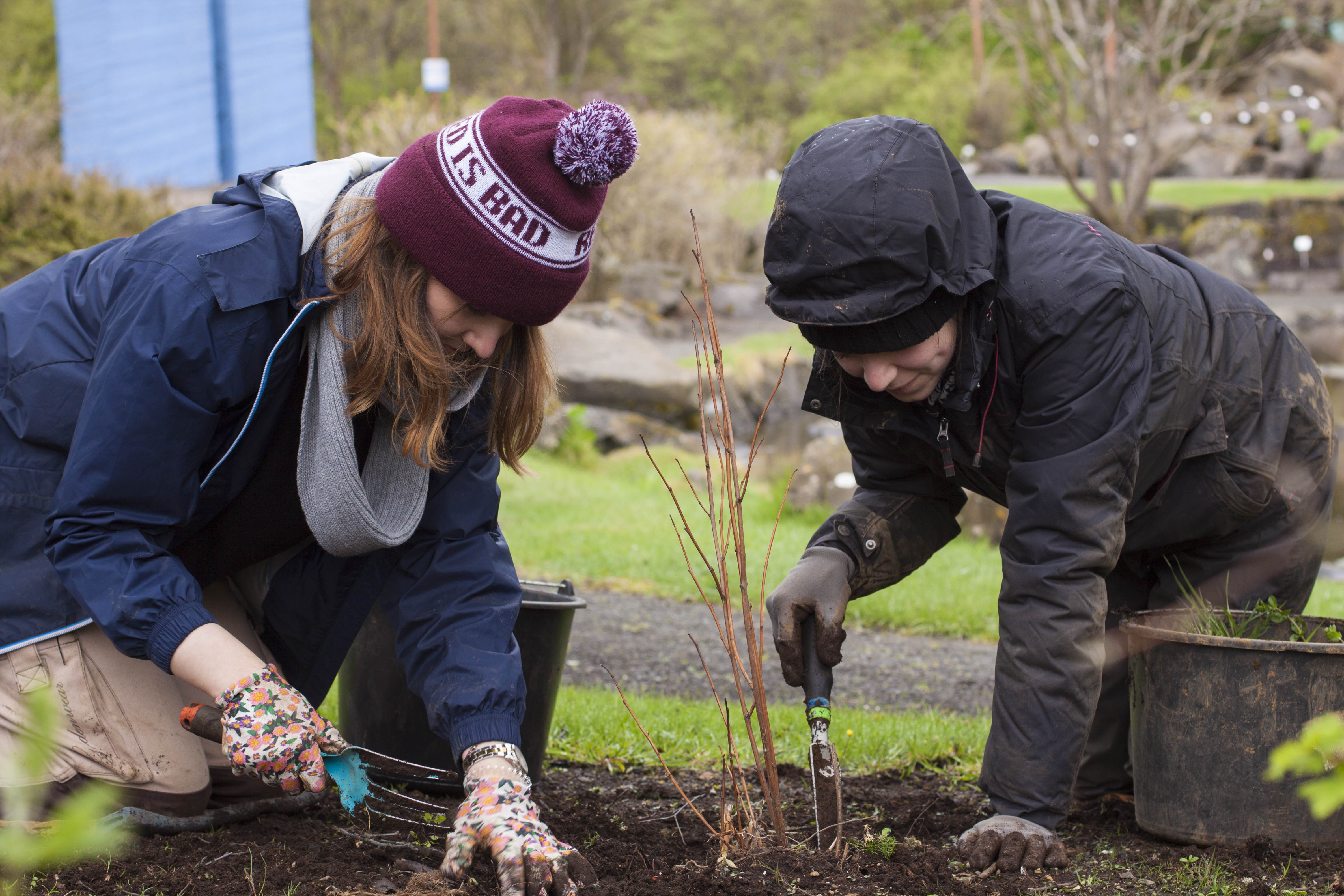 volunteer project: BOTANICAL GARDENS IN REYKJAVK photo 4