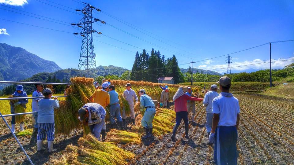 volunteer project: Tateya 18-1 (Nagano) photo 6