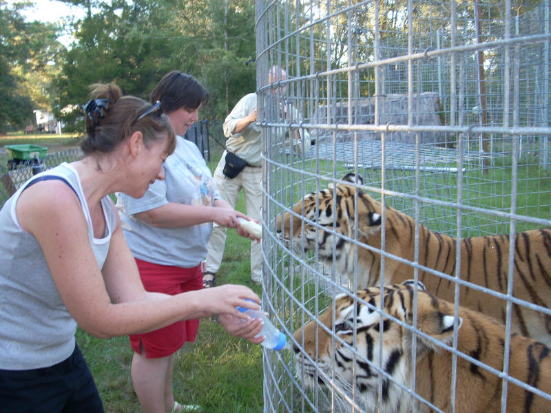 volunteer project: BIG CAT SANCTUARY photo 2