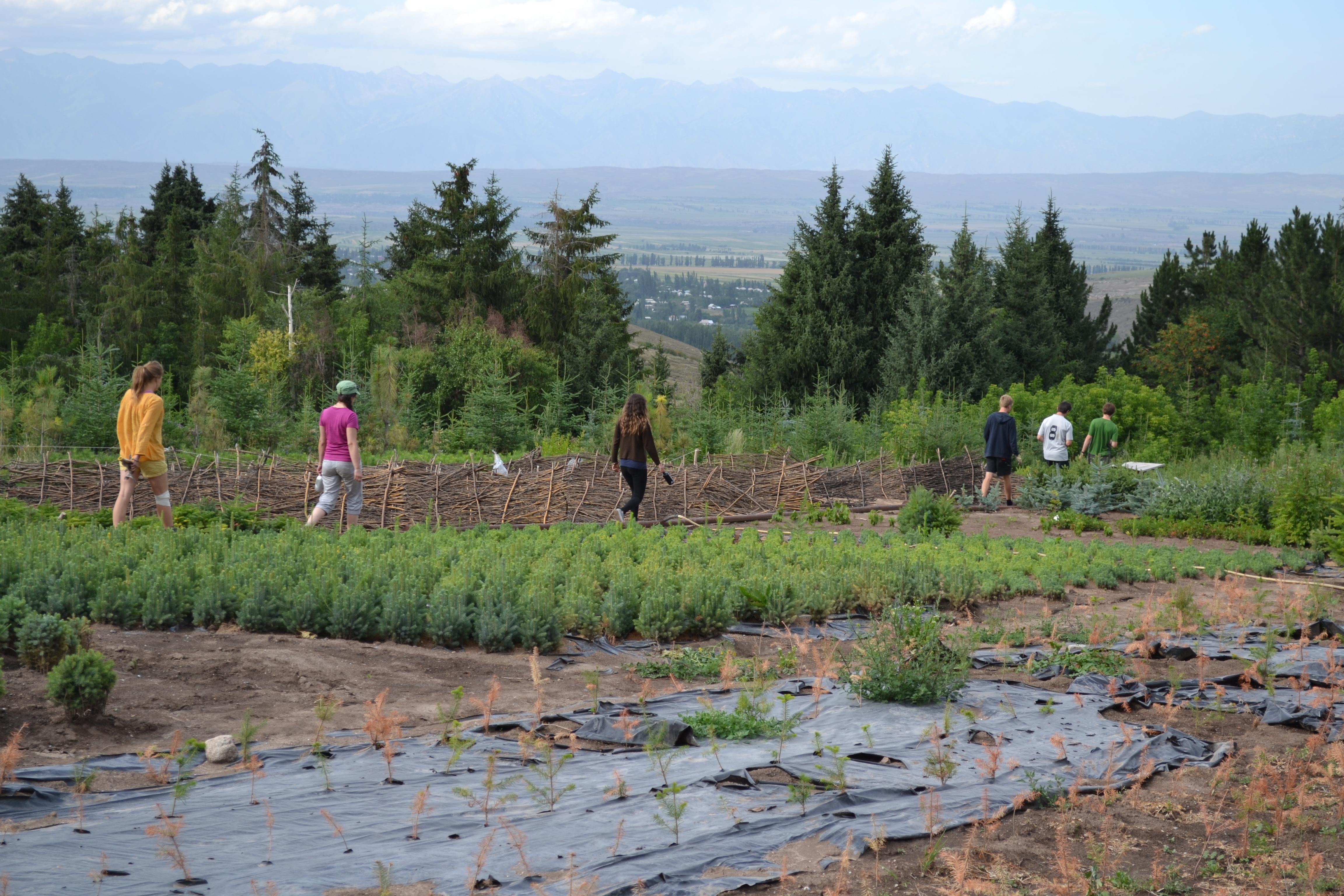 volunteer project: Ak-Suu Nursery Forest photo 2