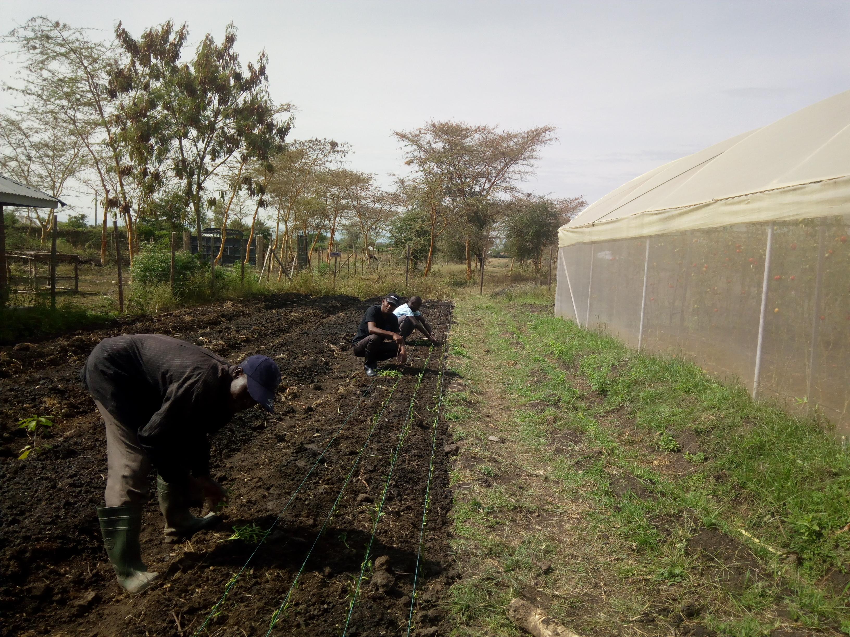 volunteer project: Ahero Resource Centre photo 1