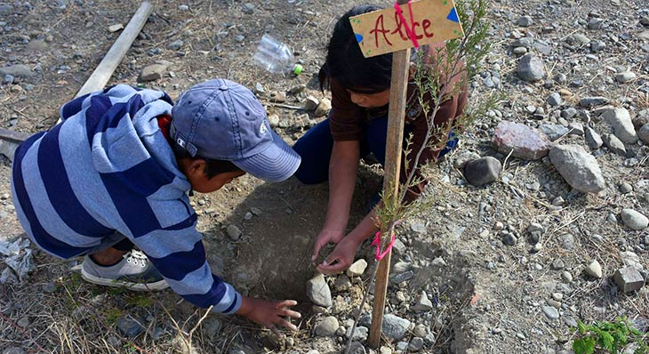 volunteer project: Make Cochabamba Green Again photo 6