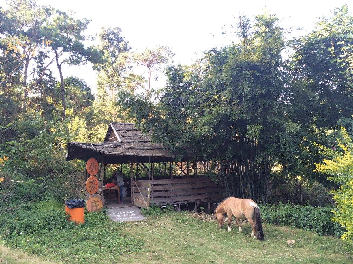 volunteer project: Sustainable Farming and Animal Sanctuary photo 17