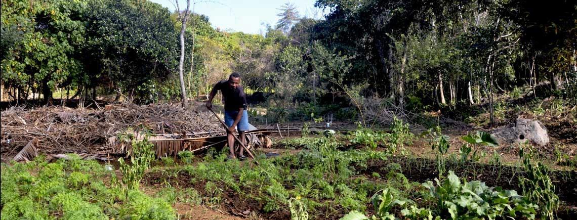 volunteer project: Agriculture et Permaculture (nouveau partenaire) photo 2