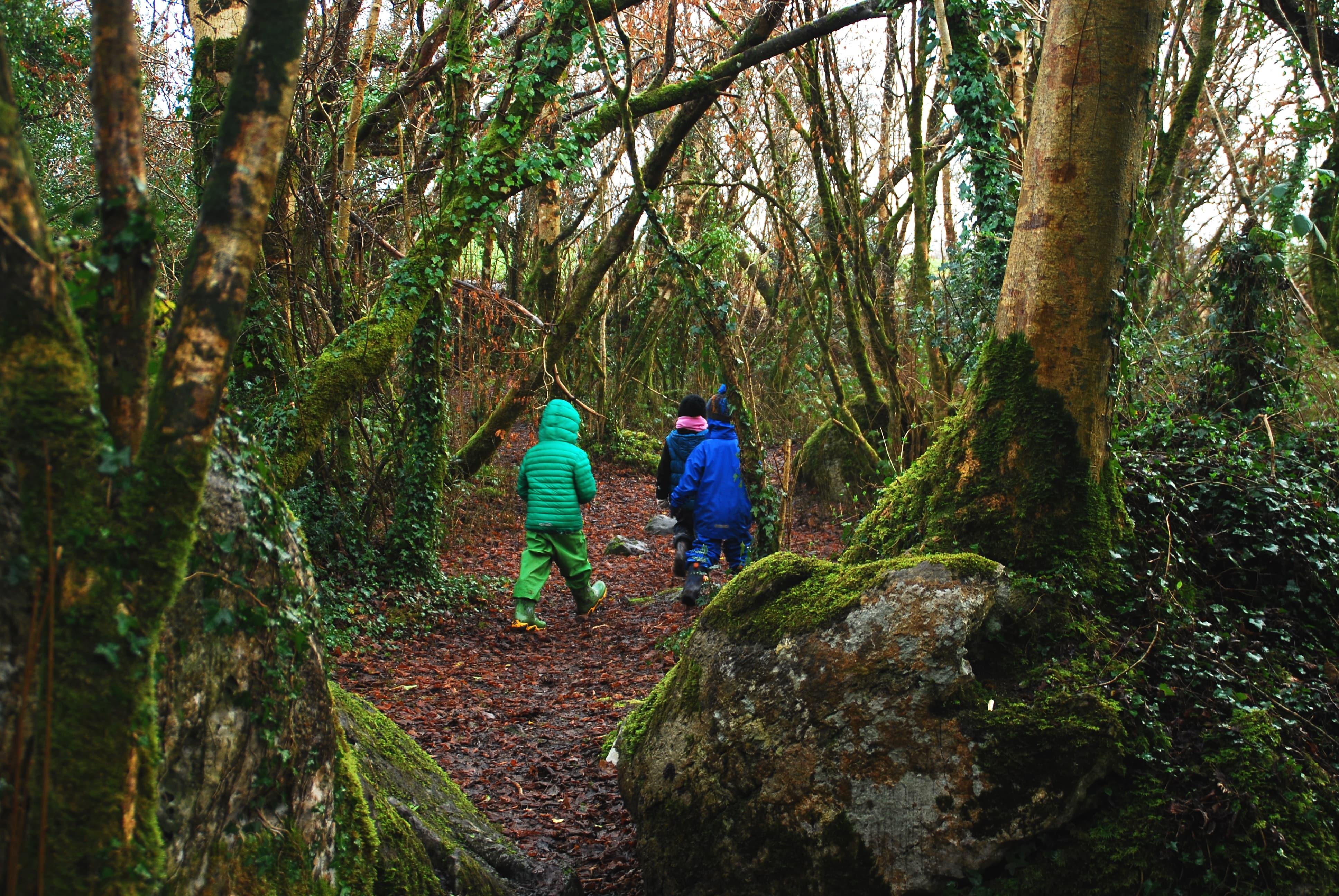 volunteer project: Galway Steiner National School (CES/SVE)  photo 6