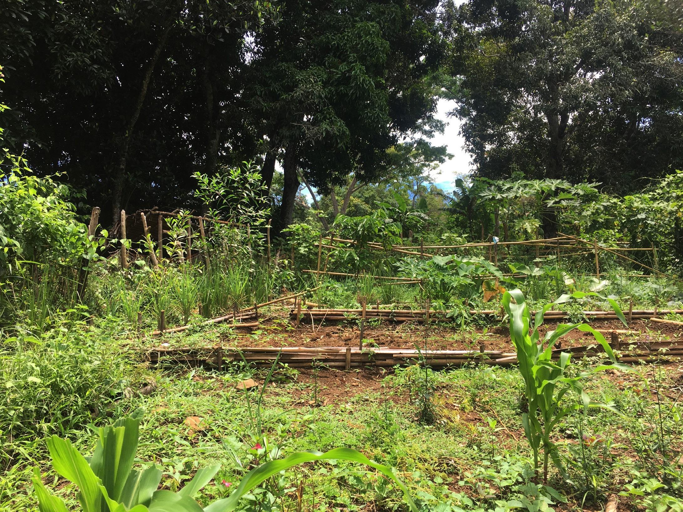 volunteer project: Agriculture et Permaculture (nouveau partenaire) photo 1