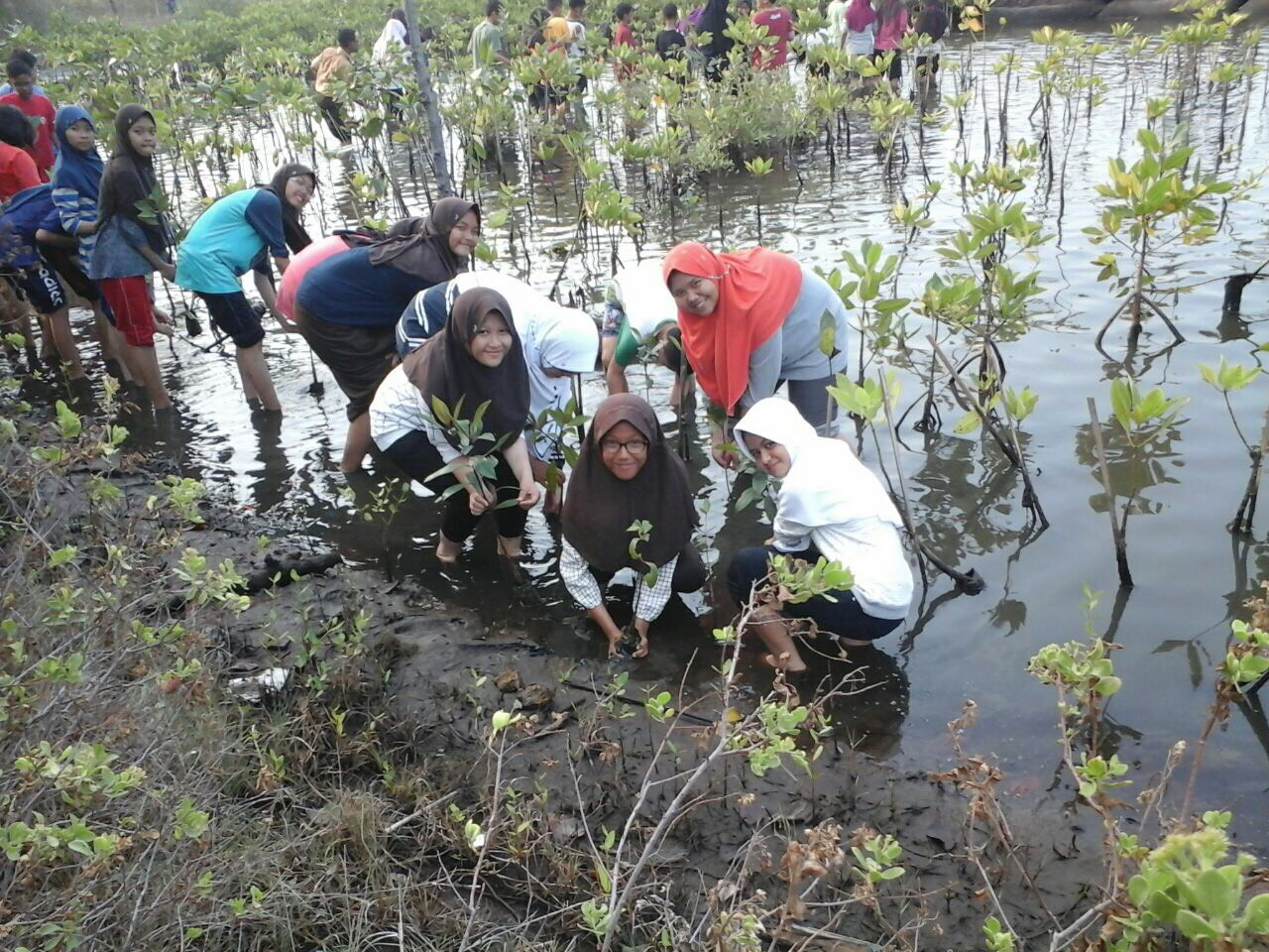 volunteer project: Mangrove To Stop Climate Chance (SCC) photo 2