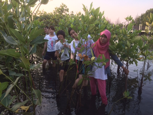 volunteer project: Mangrove To Stop Climate Chance (SCC) photo 3