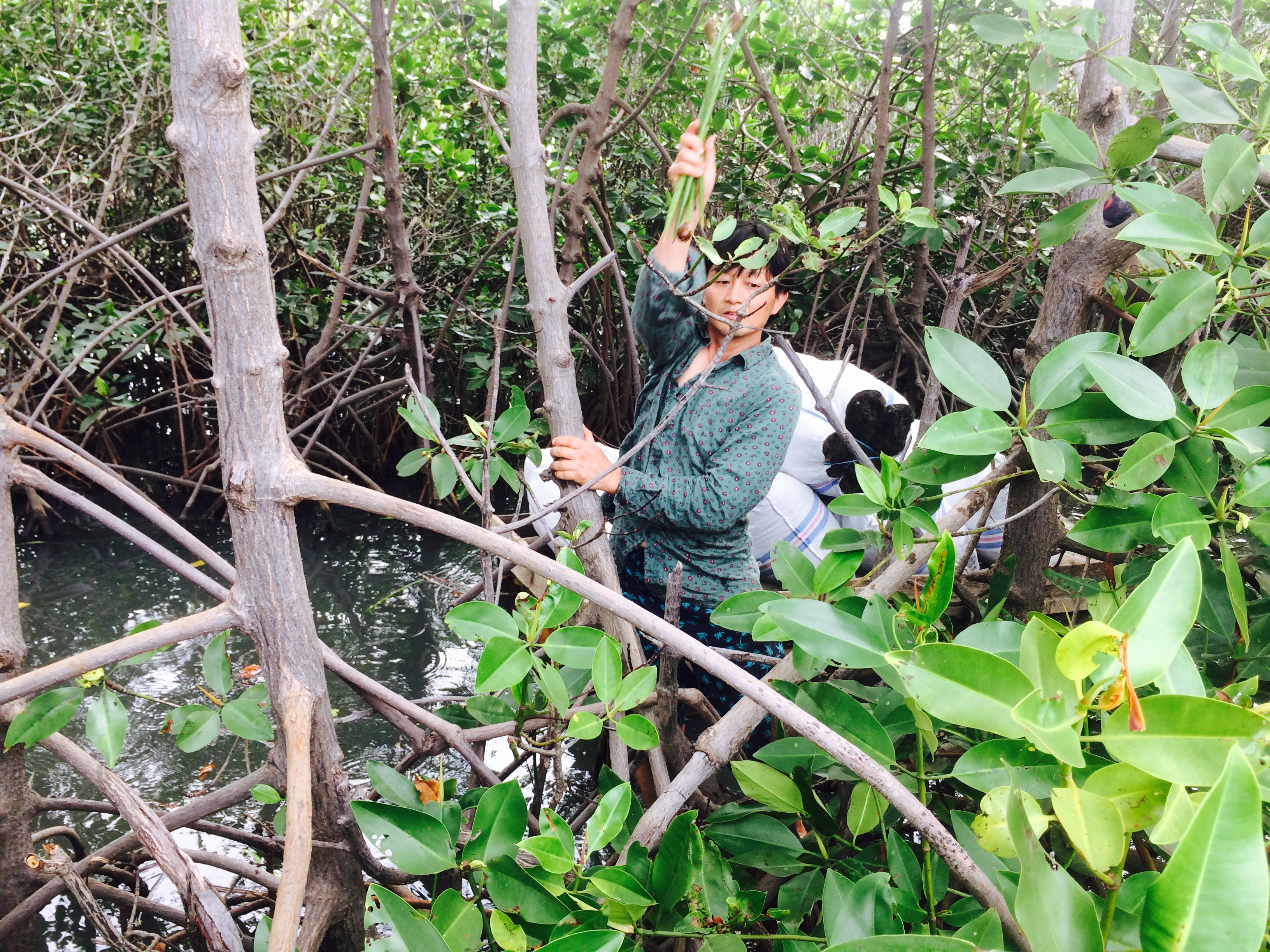 volunteer project: Mangrove To Stop Climate Chance (SCC) photo 6