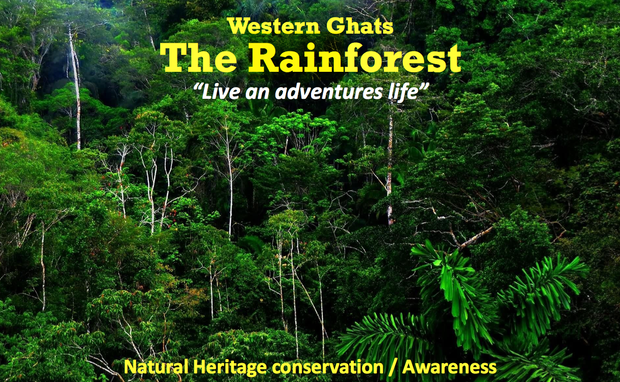 volunteer project: THE RAIN FOREST photo 1