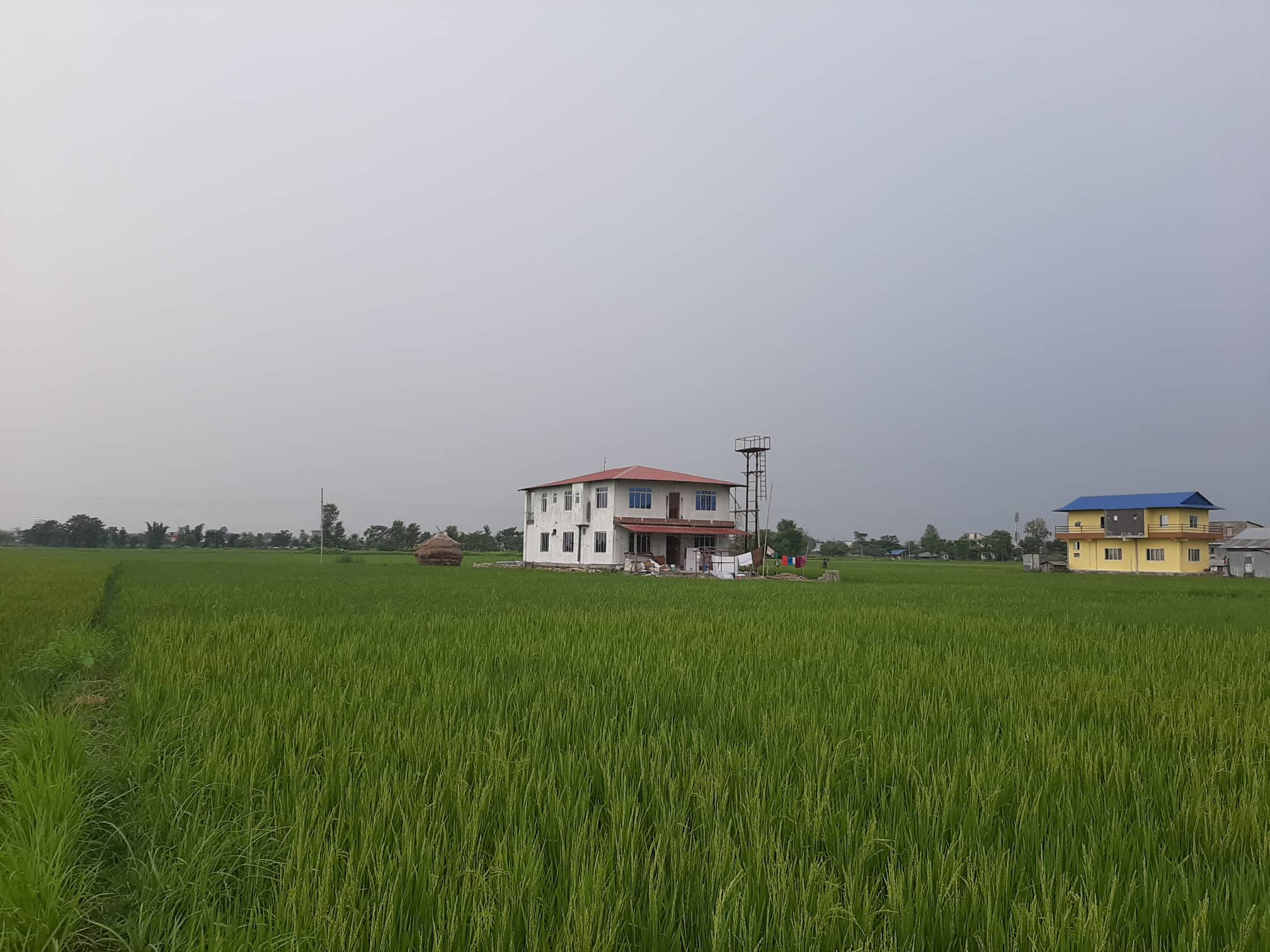 volunteer project: Agriculture Project photo 1