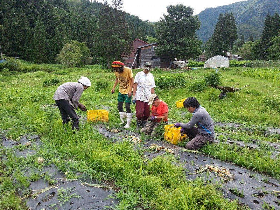 volunteer project: Maki (Nagano) photo 1